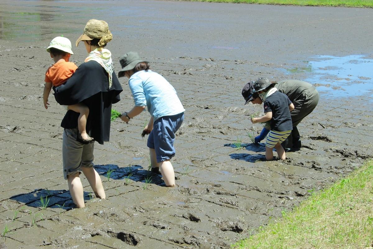 ツアー参加者のほか、地元の参加者も初めての手植えを体験していました。