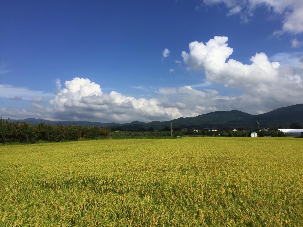 ラボの目の前には田んぼとりんご畑。奥には束稲山が広がっています。